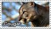 Cougar stamp by Tollerka