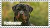 Rottweiler stamp by Tollerka