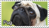 Pugs stamp by Tollerka