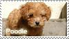 Poodle stamp by Tollerka
