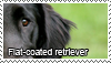 Flat-coated retriever stamp by Tollerka