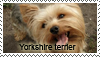 Yorkshire terrier stamp by Tollerka