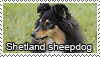 Sheltie stamp by Tollerka