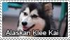 Alaskan Klee Kai stamp by Tollerka
