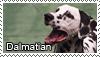 Dalmatian stamp by Tollerka