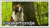 Kooikerhondje stamp by Tollerka