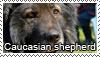 Caucasian shepherd dog stamp by Tollerka