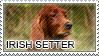 Irish setter stamp by Tollerka