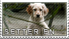 English setter stamp by Tollerka