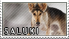 Saluki stamp by Tollerka