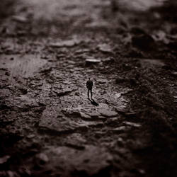 Loner I by calis