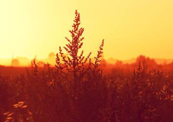 Golden Hour by eivina-art
