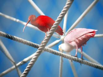 Two Birds by eivina-art