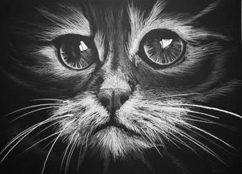 Cat by Biesiada