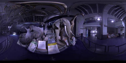 National History Museum Panorama B by Johnson-Mortimer