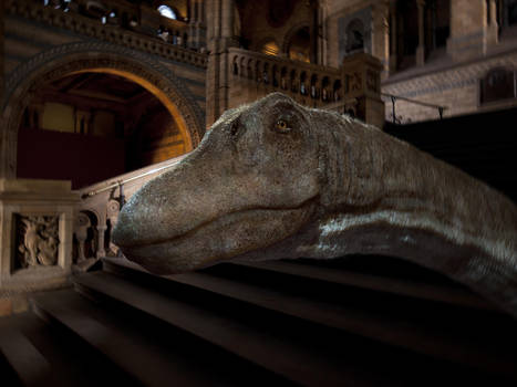 Dippy The Diplodocus  head concept by Johnson-Mortimer