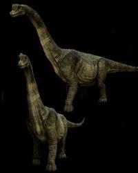 Paluxysaurus by Johnson-Mortimer