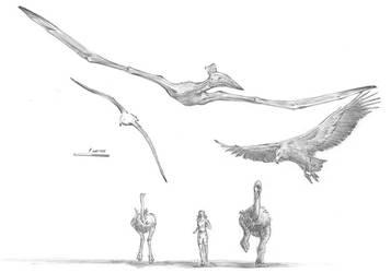 Quetzalcoatlus by dewlap