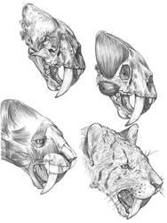 Smilodon reconstruction by dewlap