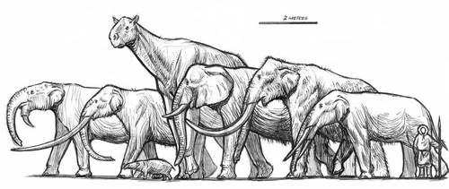 Elephant and giants by dewlap