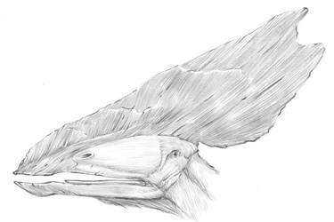 Thalassodromeus by dewlap