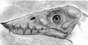 Scaphognathus by dewlap