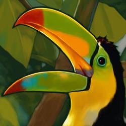 Toucan by dewlap