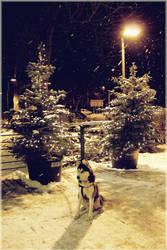 Winter by panna-cotta
