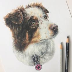 Dog Portrait by theredbirdart