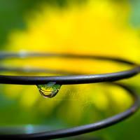 Dandelion Drop by eyedesign
