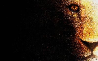Lion wallpaper desktop by mu6