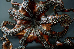 More  Of 'Cephalopod' by bronze4u