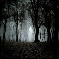 Forest II by mikeb79