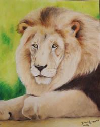 Lion (Panthera Leo) by GuillermoLabrador