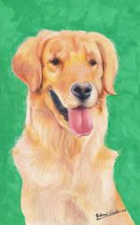 Golden Retriever (Canis Lupus Familiaris) by GuillermoLabrador