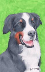 Bernese Mountain Dog (Canis Lupus Familiaris) by GuillermoLabrador