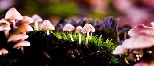 Mushroom Paradise by marc-bruno