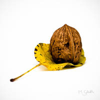 Portrait of a Walnut. by marc-bruno