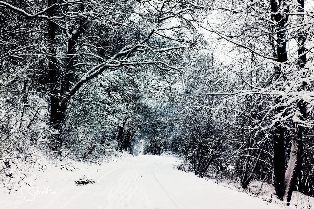 Blue Winter. by marc-bruno