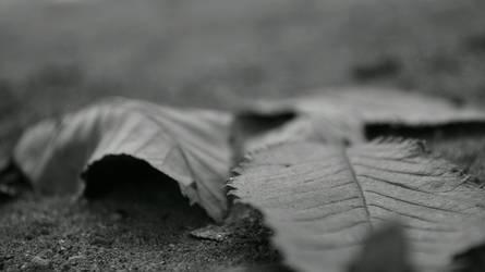 hojas by Kasoku7