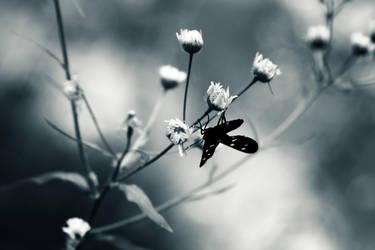un fluture... gen by UnkleBF