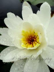 Sunlight Always Follows the Rain by R-Penney-Photography