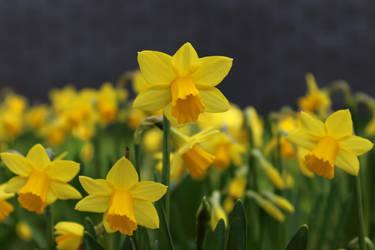 Spring 2 by FelanUk