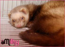 Milky, My little baby ferret. by MiulkyVanilla