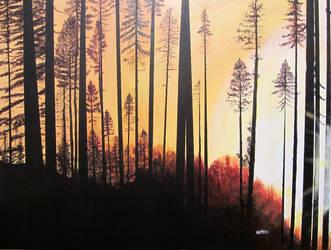 Forest Sunrise by dutch0927