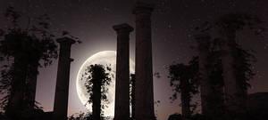 Moonrise by Platycerium