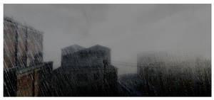 Rain and Fog by Platycerium