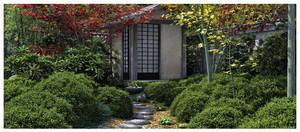 Japanese Garden Autumn II by Platycerium