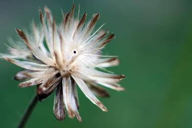 Flower-141 by josgoh