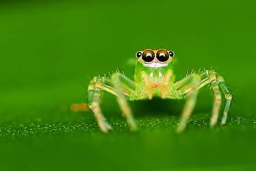 Spider 15 by josgoh